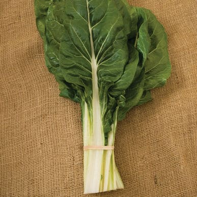 Fordhook Giant   Organic Silverbeet Seed